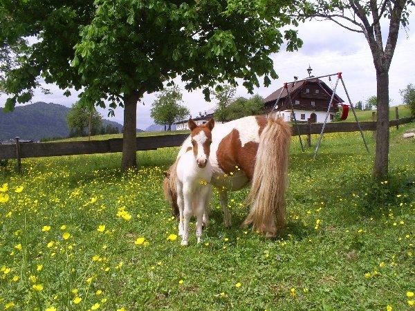 Mini pony voor kinderen