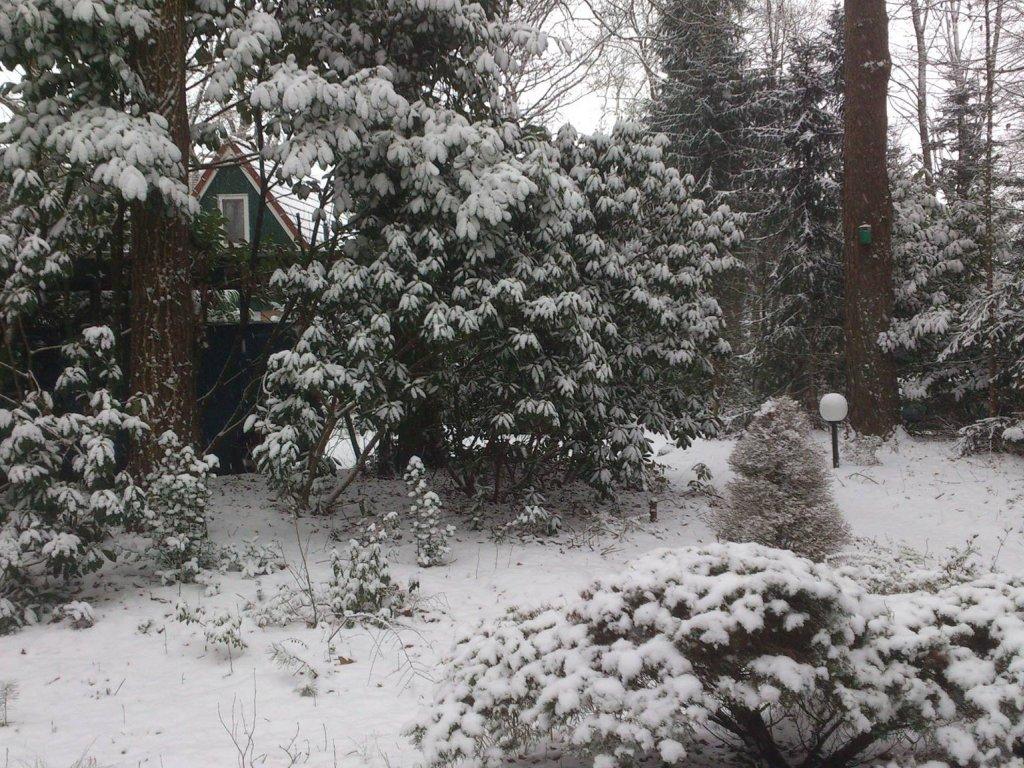 Calluna in de winter